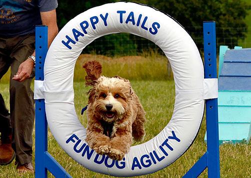 fun dog agility