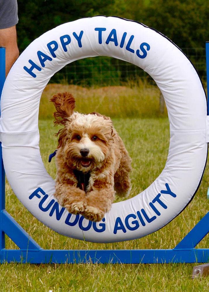 Fun Dog Agility Sessions