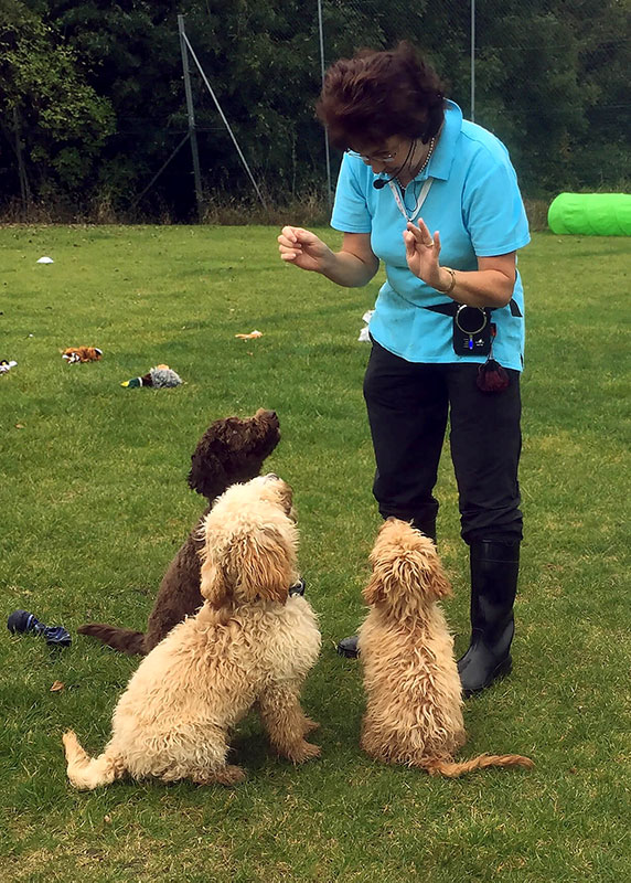 About Happy Tails Dog Training