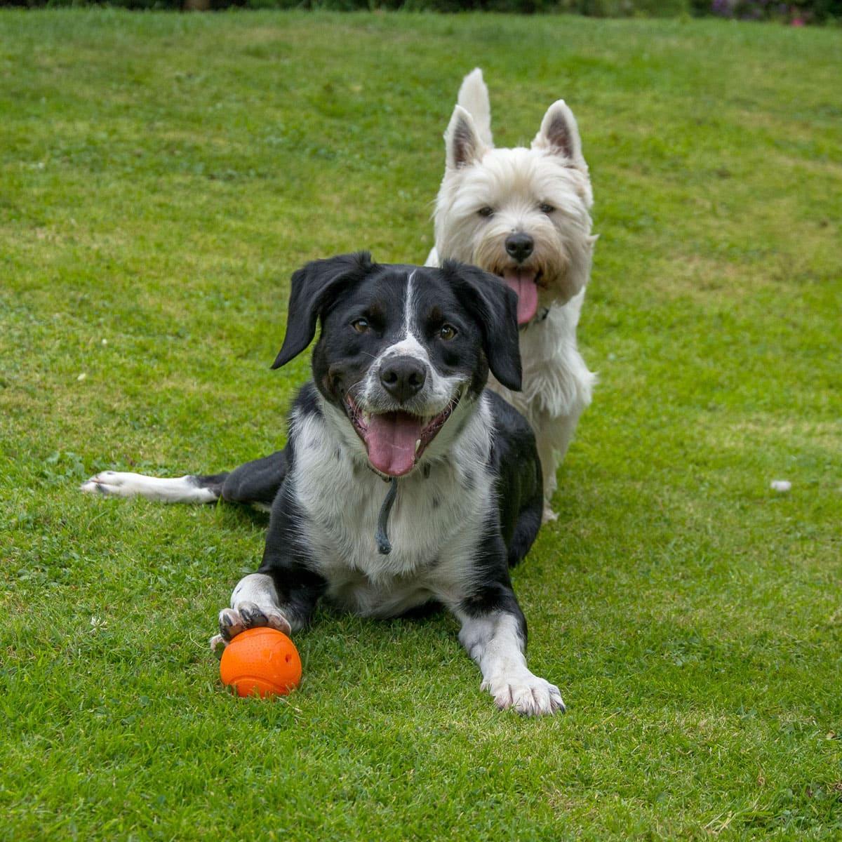 Dog Training in Tunbridge Wells